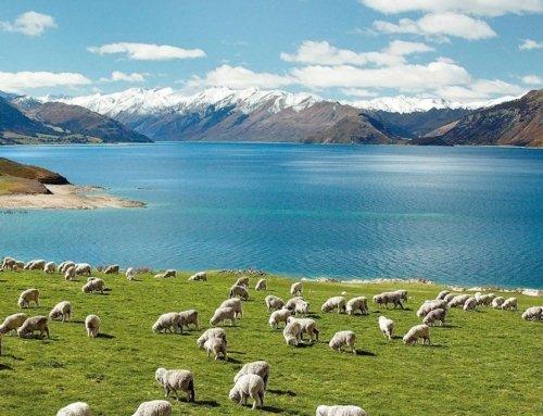 Quando Andare in Nuova Zelanda Qual è il periodo migliore per viaggiare dall'altra parte del mondo?