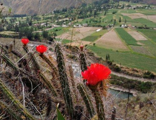 Ancascocha Trail: giorno 3 Trek a Machu Picchu tra i più belli e alternativi