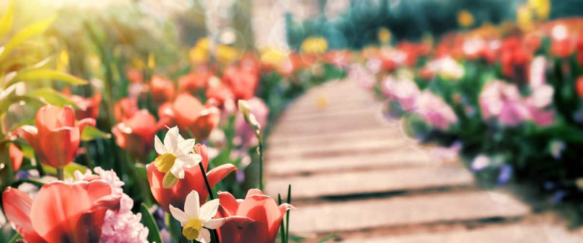 partire a Aprile: Olanda